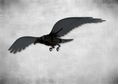 SP-adam-raven